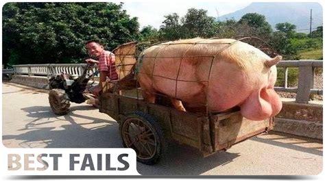 best fail best fails of the month november 2015 fail compilation
