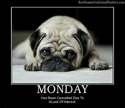 More On Monday No Plot No Problem By Chris Baty by Happy Monday Pug Www Olympianpet Just Plain