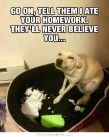 8 Facts Youll Never Believe by Best 25 Homework Meme Ideas On