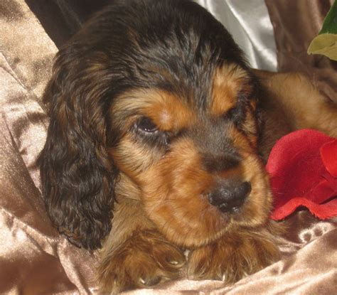 special needs puppies for sale special needs puppies kidlington oxfordshire pets4homes