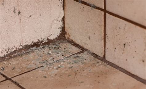 mold attract bugs   pests  pest control