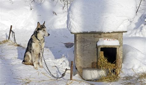 winter dog houses top 10 best dog houses for winter hammametnow
