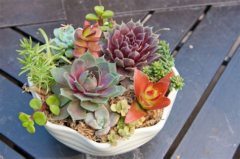 succulent arrangements succulent collection i dream of succuentsi dream of