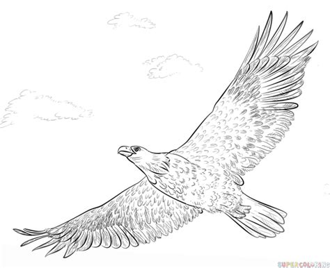 soaring eagle coloring page drawn eagle soaring eagle pencil and in color drawn