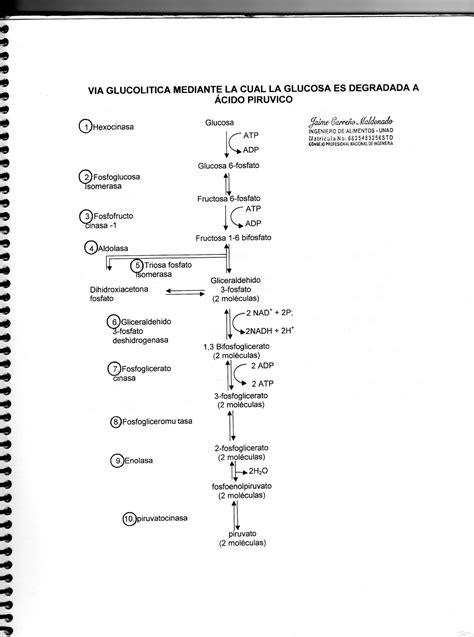 INVESTIGACIONES JAIME: Vía Glucolítica