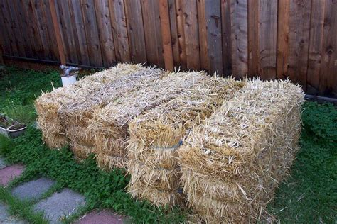 Straw Bale Garden Layout How To Build A Straw Bale Garden In 7 Steps Complete