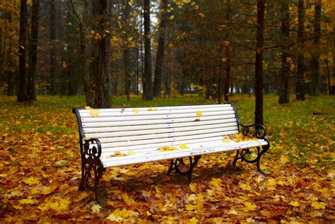 bench in nature bench in the autumn park nature photos on creative market