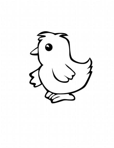 coloring page of baby chick free coloring pages of baby chick outline