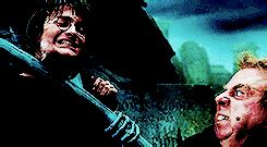 regeneration potion harry potter wiki