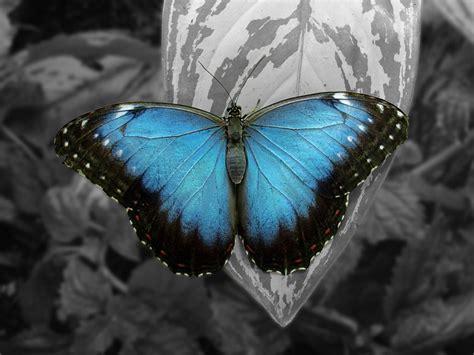 imagenes de mariposas unicas hombre o mariposa volando a trav 201 s del espejo