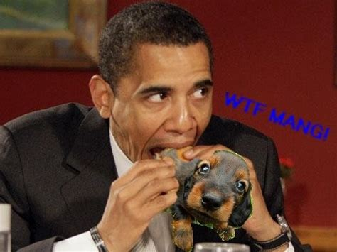 Obama Dog Meme - althouse the obama eats dog story is needed to nullify