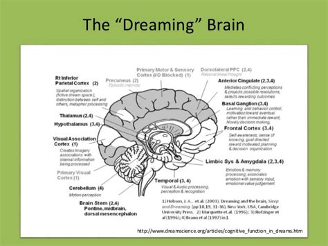 the dreaming the neurobiology of dreaming