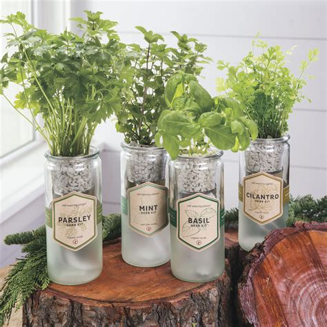 Eco Planters by Eco Planter Basil Herb Garden For Sale At Jp