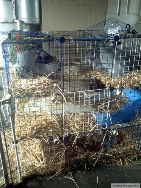 backyard rabbit farming pin awesome chinchilla cages on pinterest