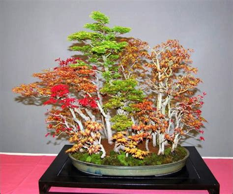 libro bonsai with japanese maples 25 best ideas about bonsai forest on japanese