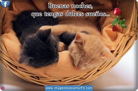 imagenes buenas noches de gatitos 60 imagenes de abrazos con frases para compartir amor y