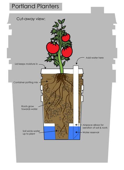 Sub Irrigated Planter System inside green d i y sub irrigation