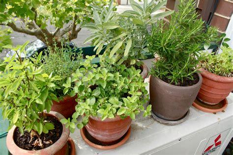 herb garden plants lawn garden how to grow an edible balcony garden wandering spice as wells as img 8535 the
