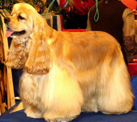 imagenes de mascotas perros related keywords perros long tail keywords