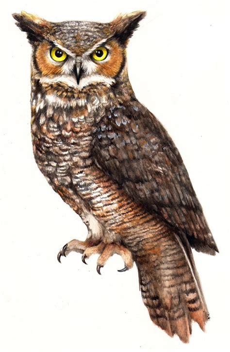 great horned owl tattoo design watercolor great horned owl ideas inspiration