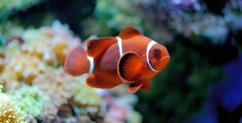 imagenes animales acuaticos y terrestres 100 ejemplos de animales terrestres y acu 225 ticos