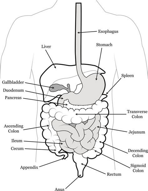 rectum and diagram colon rectal surgery the everett clinic