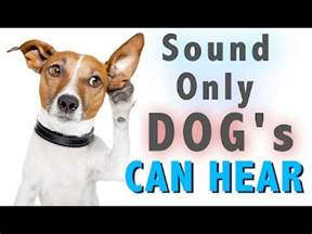 sound dogs   hear hq youtube