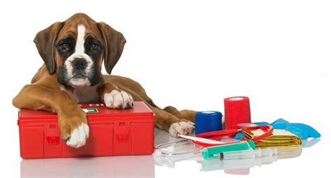 presents for dogs 10 gifts for dogs and owners who the outdoors