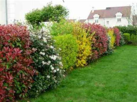 Creer Un Jardin Fleuri Toute L ée by Avoir Une Haie Fleurie Toute L 233 E Une Mission