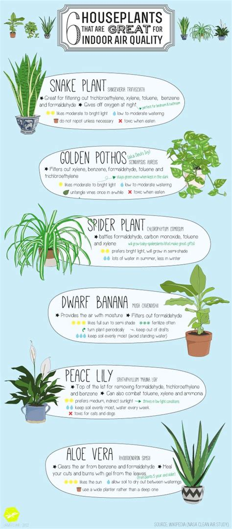benefits of house plants 6 best plants you can grow indoors for air purification