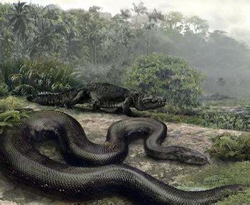 ainut tijar  ular terbesar  dunia versi   spot