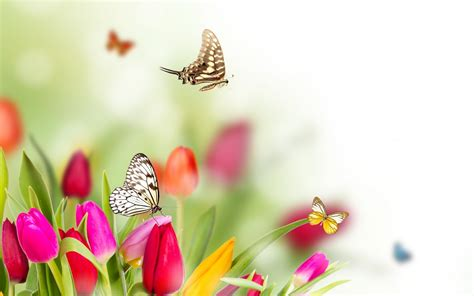 imagenes wallpapers mariposas banco de imagenes y fotos gratis wallpapers de mariposas 2