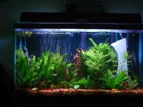 Home Designer Pro Ebay pictures of fish tanks joy studio design gallery best