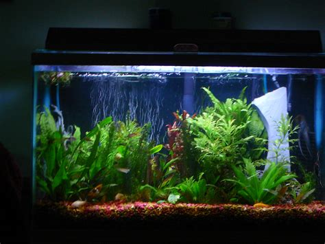 fish tank pictures of fish tanks studio design gallery best
