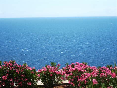 i fiori mare fiori e mare foto immagini paesaggi natura foto su