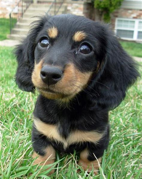 Types Of Small Dogs With Hair by Breeds Small Home Types
