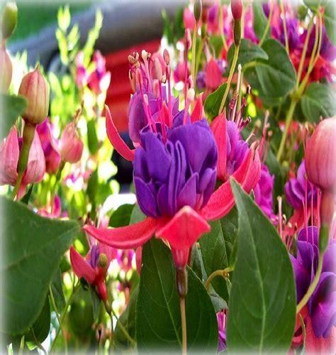 imagenes de flores mas bonitas fotos de las flores mas bonitas las mejores imagenes
