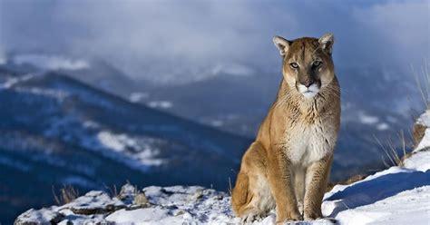 imagenes de animales salvajes gratis descargar fotos de animales salvajes gratis