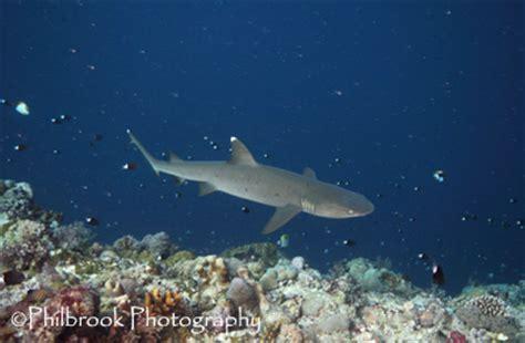custom white balance & underwater photography