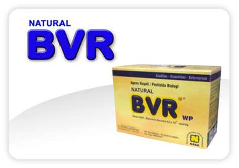 Bvr Nasa Depok 1 solusi nasa untuk hama penggerek batang padi