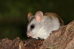 facts about nocturnal animals that ll keep you awake at night