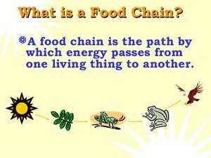 Ford Chaign Food Chains