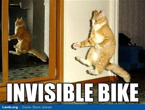 Invisible Cat Meme - pin by drea cypress straw on insane kitty cat pinterest