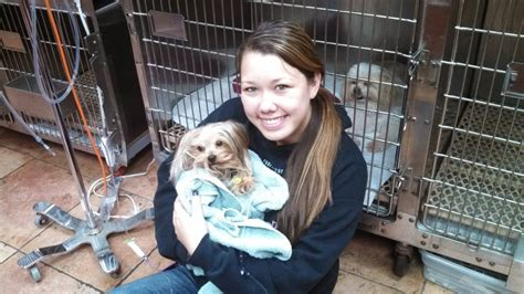 care for yorkie after spaying story of the week macaroni the yorkie care animal hospital