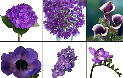 types of purple types of purple flowers for bouquets