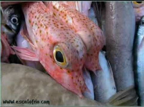 imagenes asombrosas de animales raros peces raros youtube