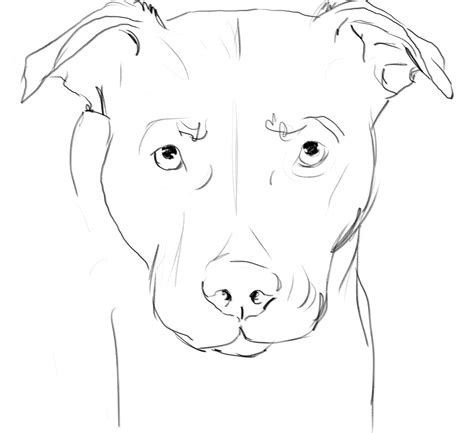 Dog Face Sketches - Litle Pups Easy Dog Face Drawing