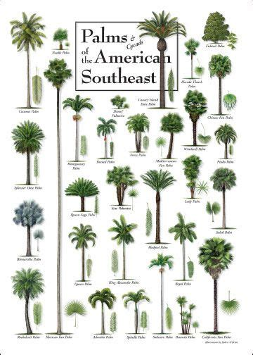 Patio Design Houston 25 Best Ideas About Palm Trees Landscaping On Pinterest