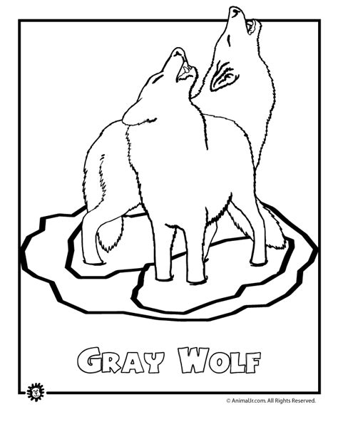 north american animals coloring page endangered gray wolf animal jr