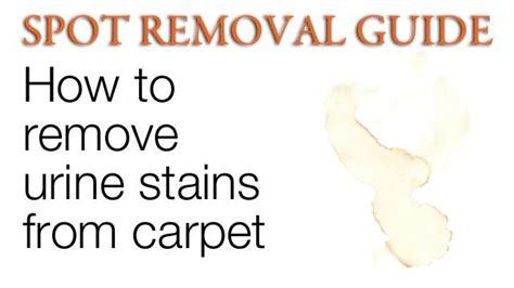 How To Get Urine Stain Out Of A Mattress by How To Get Urine Stains Out Of Carpet Removing Urine